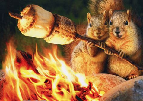 Squirrels Toasting Marshmallow Funny Anniversary Card by